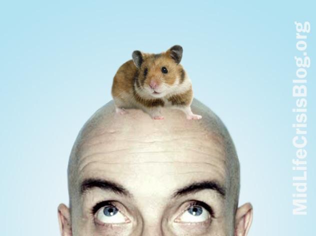 balding mice copy